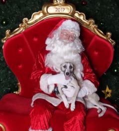Santa - Puppy
